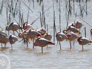 bird watching donana national park day trip from seville