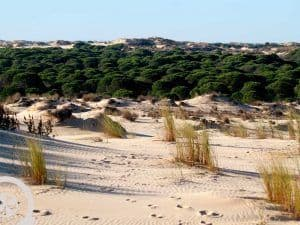 dunes donana national park day trip from seville