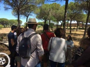 guided visit to donana national park day trip from seville