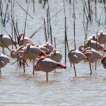 aves flamencos parque nacional de doñana excursión desde sevilla