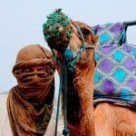 camel seville to morocco 2 day trip tangier