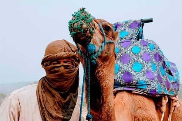camello excursion a tanger desde sevilla 2 dias